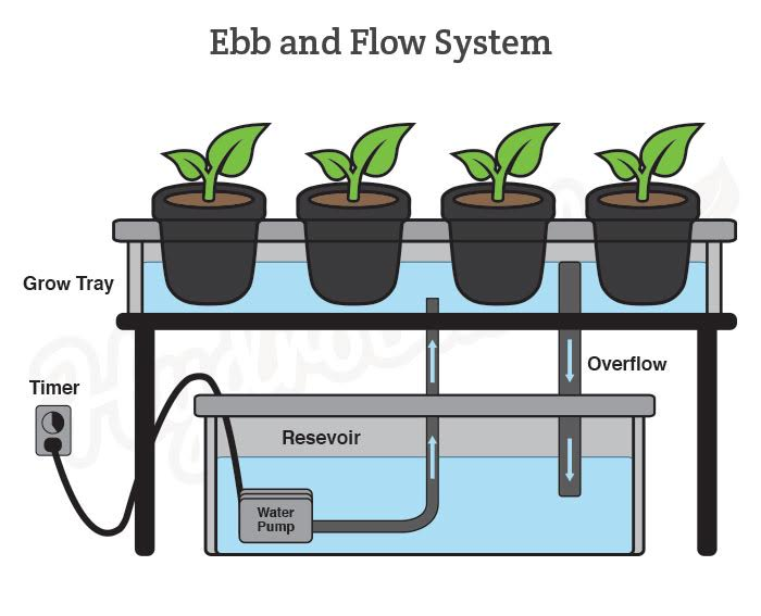 Ebb and flow, also known as flood and drain, hydroponic system