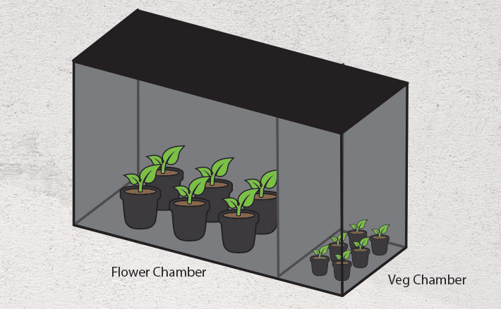 Multi-chamber grow tent for perpetual harvests