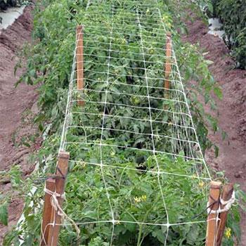 Trellis netting for plant support