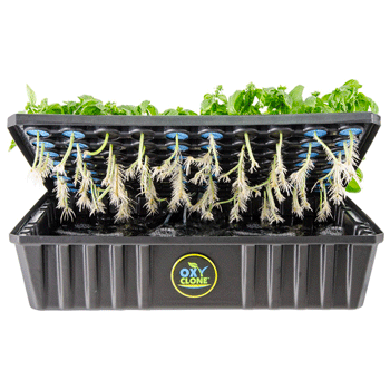 Hydroponic Deep Water Bubble Cloning Machines