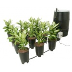Complete Hydroponic Systems