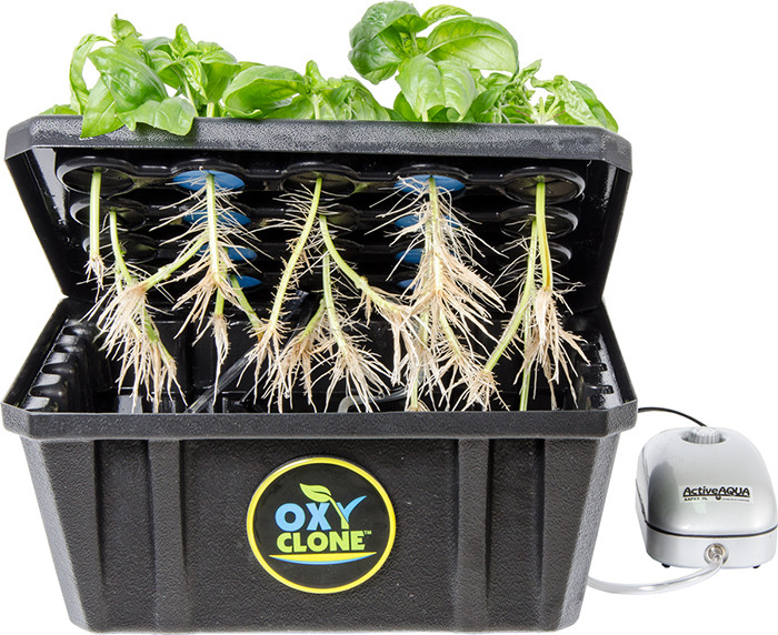 Oxyclone Cloning System 20 40 Amp 80 Sites Hydroponic