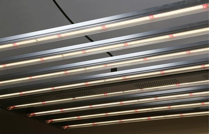 Gavita LED Grow Light