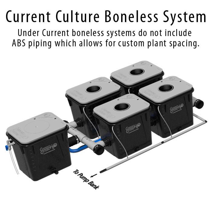 Current Culture Under Current 4 Boneless