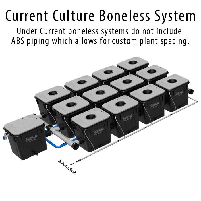 Current Culture Under Current Evolution 12 Boneless