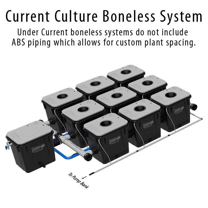Current Culture Under Current Evolution 9 Boneless