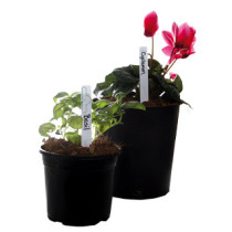 Plant Markers, pack of 50
