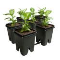 Active Aqua Grow Flow 2.0 Expansion Kit w/six 5 gal Square Pots