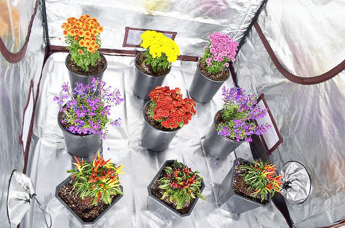 Choose your grow method