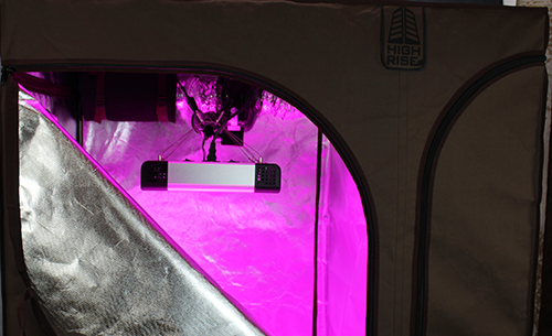 Choose a grow light for your multi-chamber tent