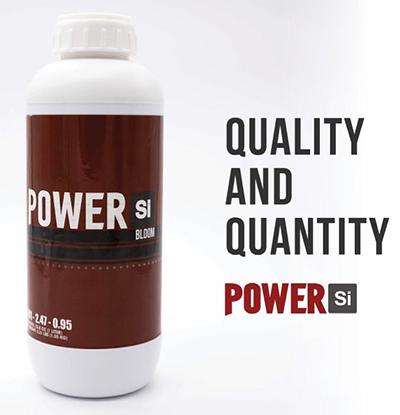 Power SI Bloom Quantity & Quality