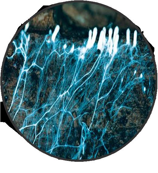 Vegamatrix hypHa Microbial