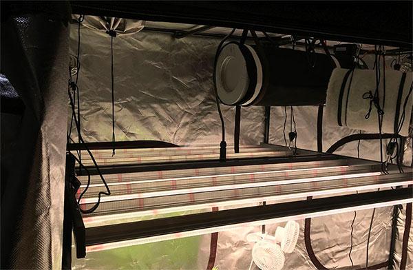 Gavita 1700e In Grow tent