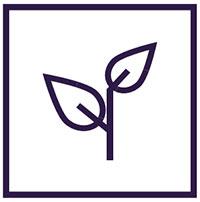 Improved Plant Development