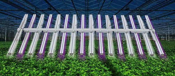 LEDex in Greenhouse