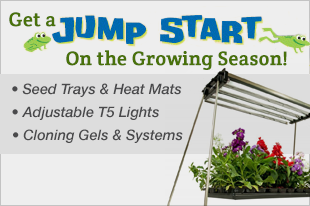 Start your seeds with Jump Start