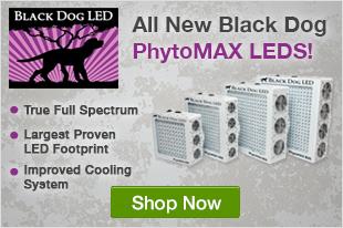 Black Dog Phytomax LEDs