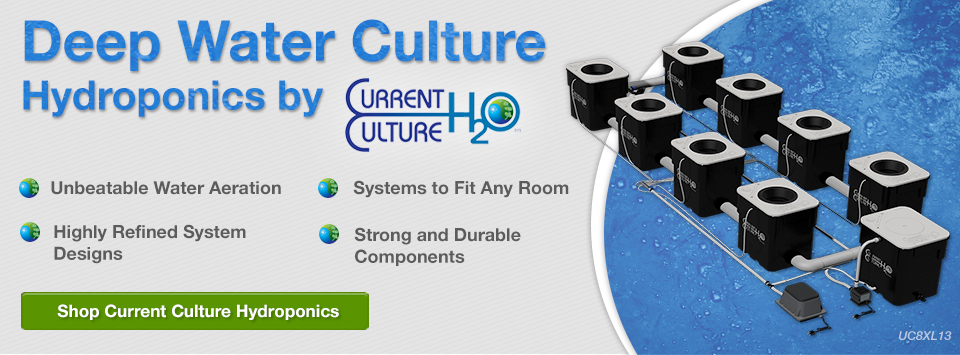 Current Culture DWC Hydroponics on Sale