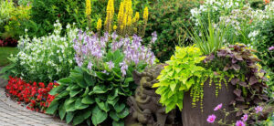 Annual vs Perennial Plants: What's The Difference?