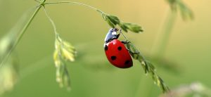 Complete Guide On Beneficial Bugs For Plants