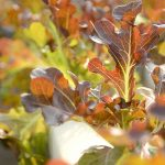 Best Winter Garden Vegetables To Grow In The Cold