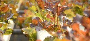 Best Winter Garden Vegetables To Grow In The Cold