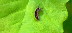 How To Get Rid Of Caterpillars On Plants Fast