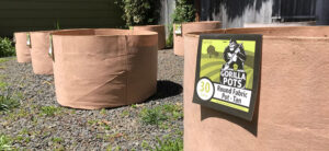 Container Gardening: Growing In Garden Pots
