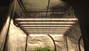 Gavita Pro 1700e LED Grow Light Review