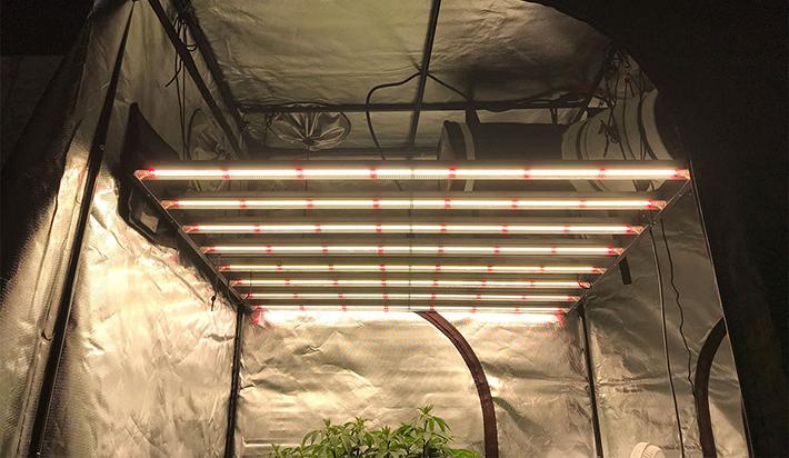 Gavita Pro 1700e LED Grow Light Review