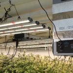 Grow Room CO2 Calculator