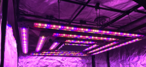 Grow Light Certifications: What Do They All Mean?