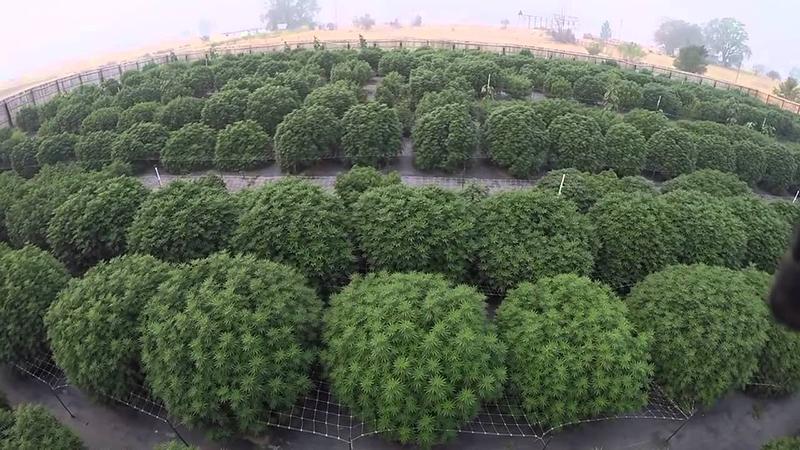 Hemp Cultivation Supplies