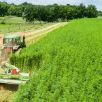 Hemp Harvester - Equipment and Supplies For Commercial Farms