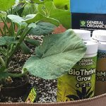 How Often Should I Give My Plants Nutrients?