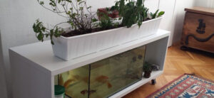 How To Build An Aquaponics System Cheap
