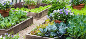 How To Plant A Raised Garden Bed