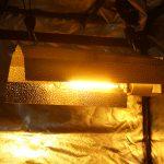 How To Handle Excessive Grow Tent Heat