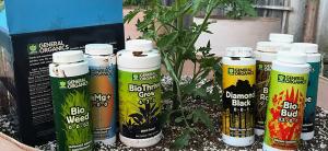 NPK Ratio & Nutrient Balance In Plants