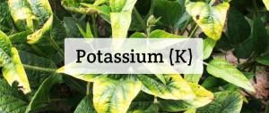 Potassium For Plants: Deficiency, Toxicity, Sources, & More