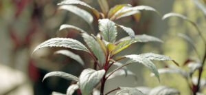 Silica For Plants: What Every Grower Needs To Know