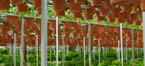 Vertical Growing: The Future Of Gardening & Farming