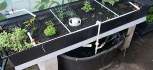 The Best Hydroponic Water Pump Of 2021