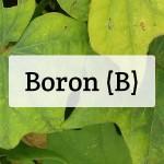 Boron (B) Nutrient Deficiencies