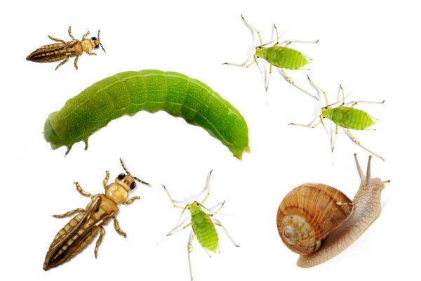 Aphids, Caterpillars, Gnats, Spider Mites, Thrips, Whiteflies, and other pests, oh my!