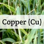 Copper (Cu) Nutrient Deficiencies