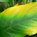 Diagnosing Nutrient Deficiencies In Plants