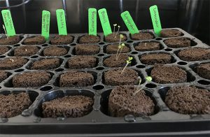 How To Germinate Seeds: The Definitive Guide
