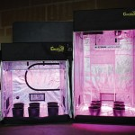 Grow Tent Buying Guide
