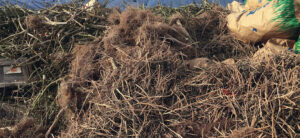 Harvest Waste Disposal - What Should You Do With All The Leftover Plant Matter?